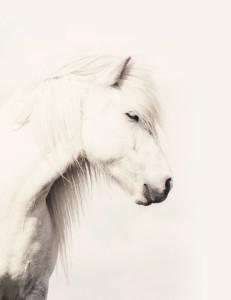 urban-road-horse-231x300